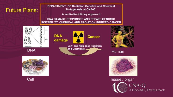 DEPARTMENT  OF Radiation Genetics and Chemical Mutagenesis at CNA-Q: