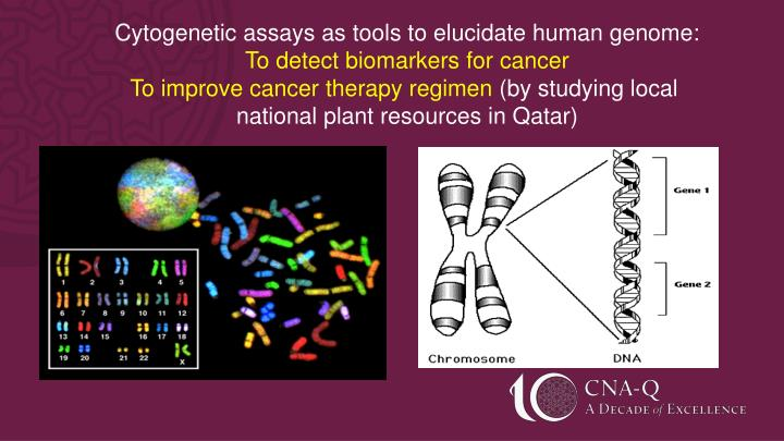 Cytogenetic assays as tools to elucidate human genome: