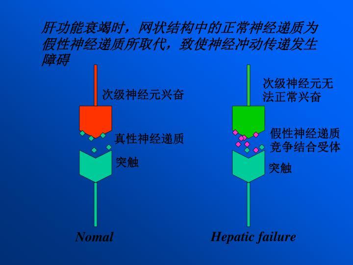 肝功能衰竭时,网状结构中的正常神经递质为假性神经递质所取代,致使神经冲动传递发生障碍