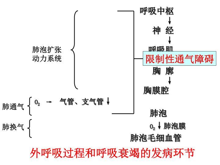 肺泡扩张动力系统