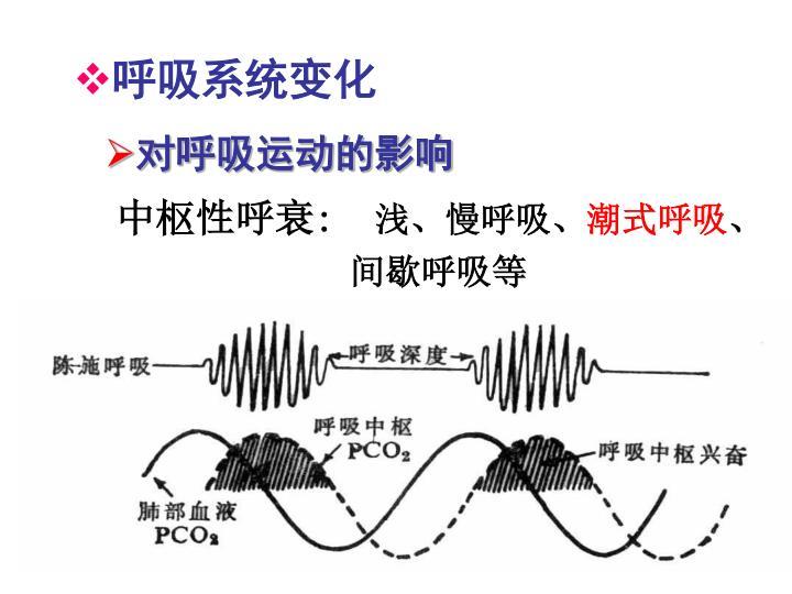 呼吸系统变化