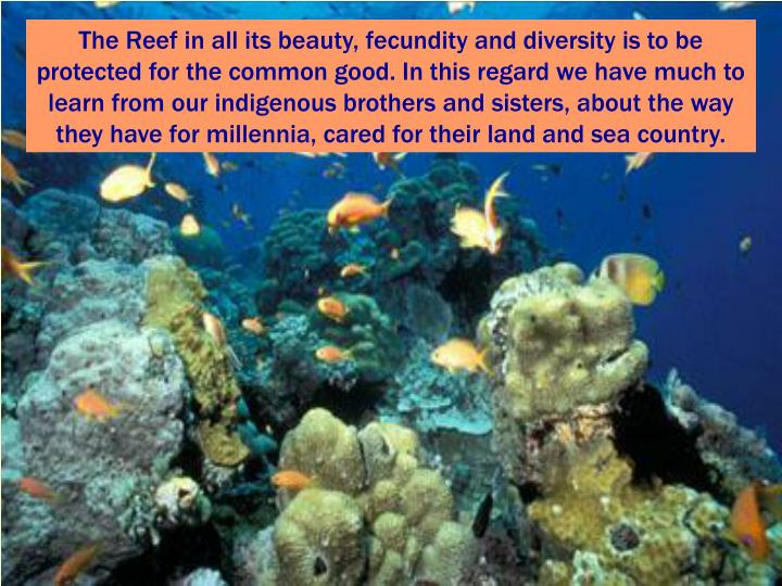 The Reef in all its beauty, fecundity and diversity is to be protected for the common good. In this regard we have much to learn from our indigenous brothers and sisters, about the way they have for millennia, cared for their land and sea country.