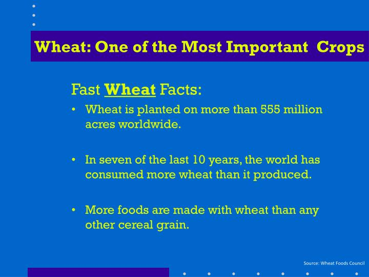 Wheat: One of the Most Important  Crops