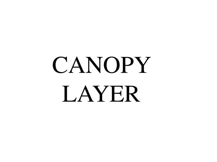 CANOPY LAYER