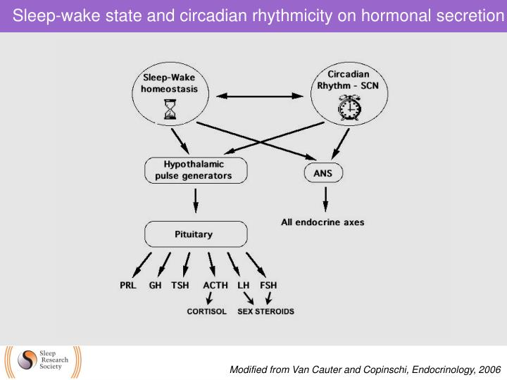 Sleep-wake state and circadian rhythmicity on hormonal secretion