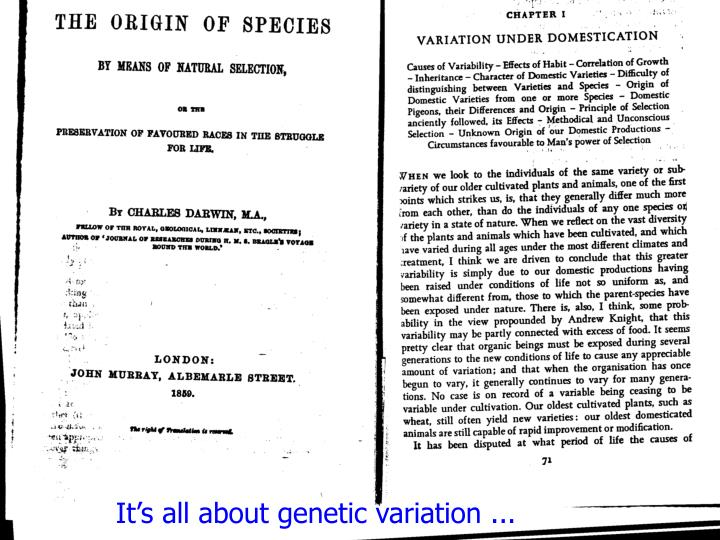 It's all about genetic variation ...