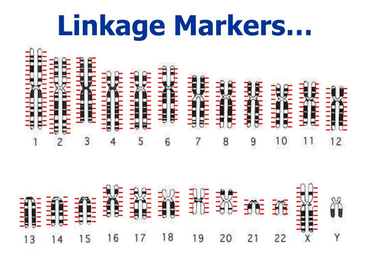 Linkage Markers…