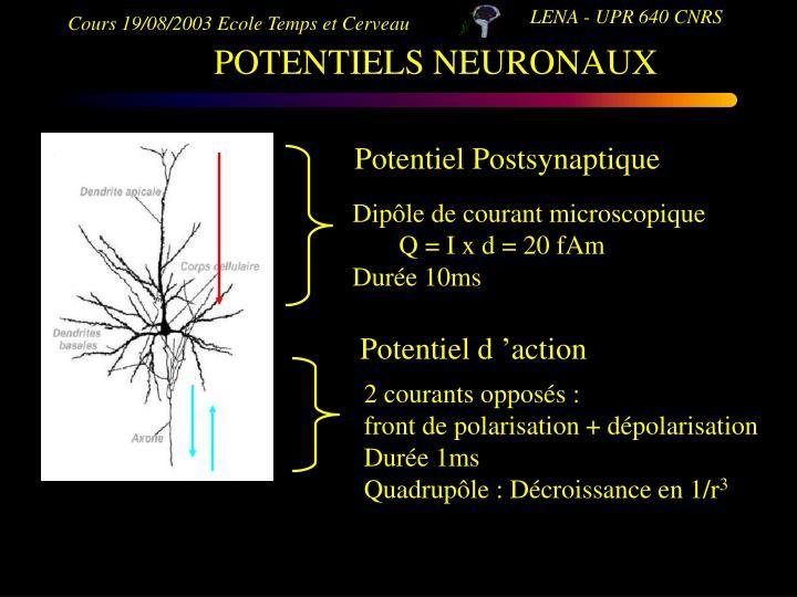 POTENTIELS NEURONAUX