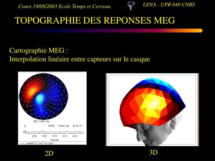 TOPOGRAPHIE DES REPONSES MEG