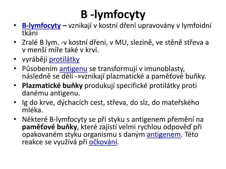 B -lymfocyty