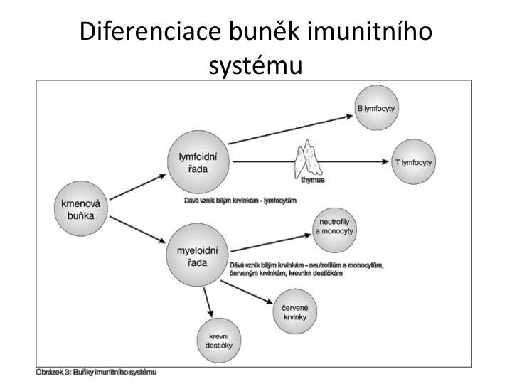 Diferenciace buněk imunitního systému