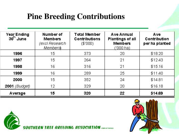 Pine Breeding Contributions
