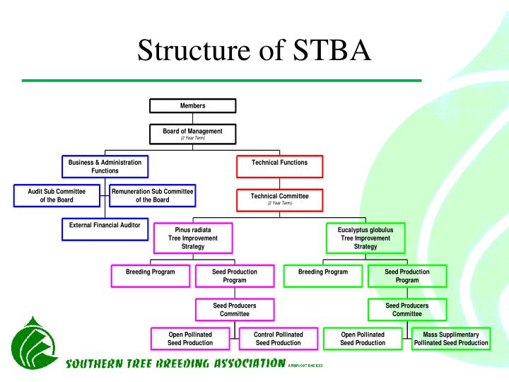 Structure of STBA
