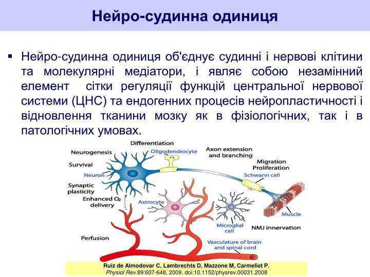 Нейро-судинна одиниця