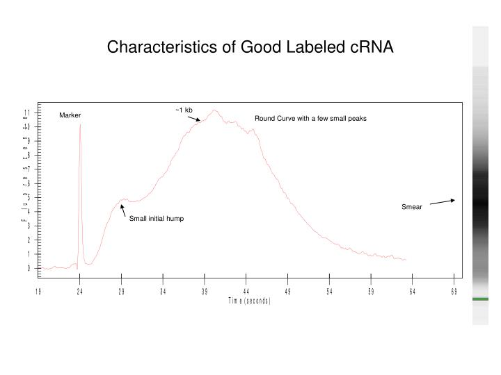 Characteristics of Good Labeled cRNA