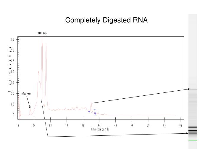 Completely Digested RNA