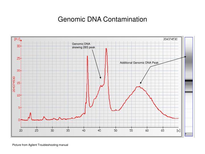 Genomic DNA Contamination