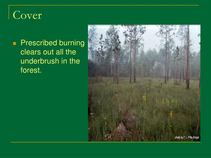 Prescribed burning clears out all the underbrush in the forest.