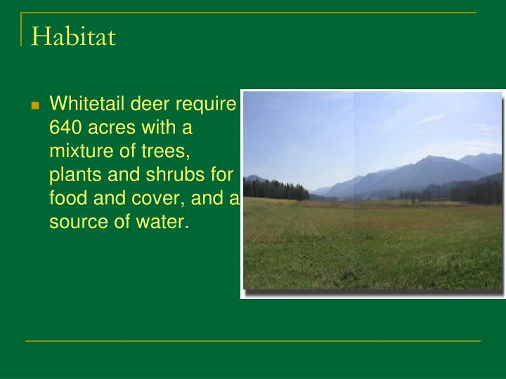Whitetail deer require 640 acres with a mixture of trees, plants and shrubs for food and cover, and a source of water.