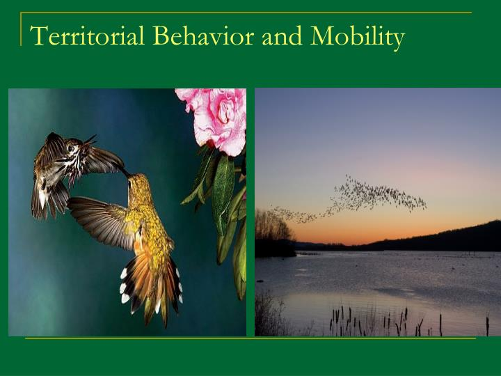 Territorial Behavior and Mobility