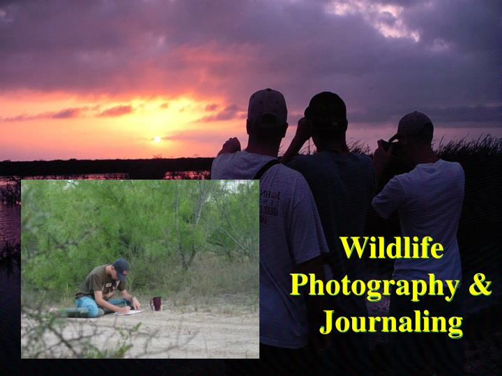 Wildlife Photography & Journaling