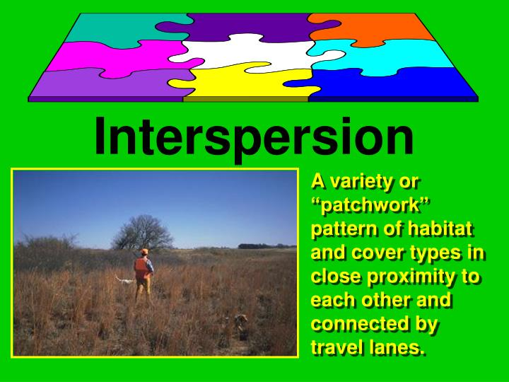 Interspersion