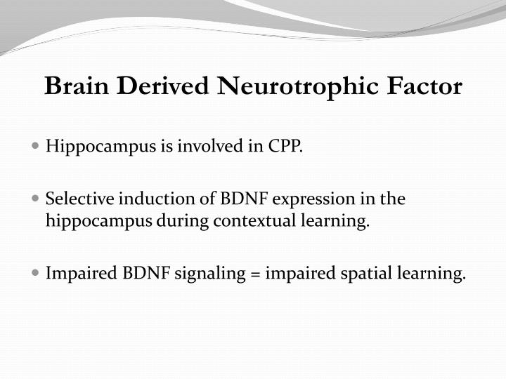 Hippocampus is involved in CPP.