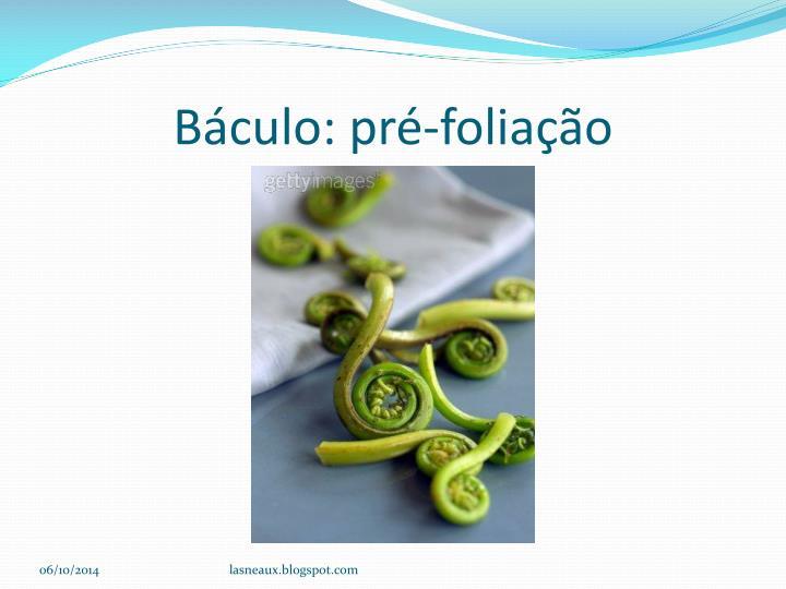 Báculo: pré-foliação