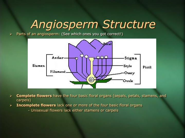 Angiosperm Structure