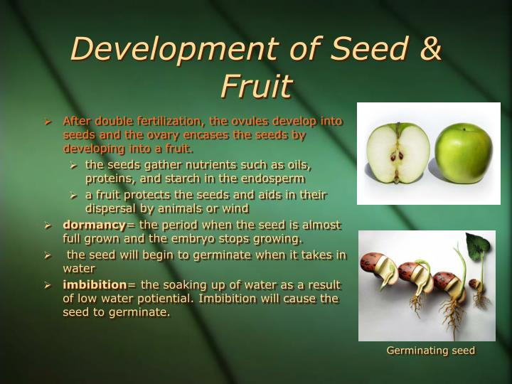 Development of Seed & Fruit