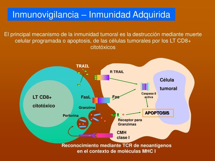 Inmunovigilancia – Inmunidad Adquirida