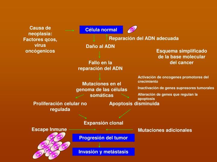 Causa de neoplasia: Factores qcos, virus oncógenicos