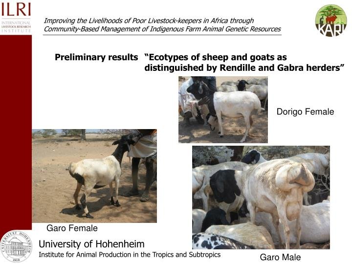 "Preliminary results""Ecotypes of sheep and goats as distinguished by Rendille and Gabra herders"""