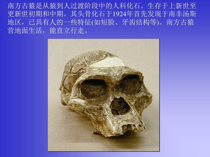 南方古猿是从猿到人过渡阶段中的人科化石。生存于上新世至更新世初期和中期。其头骨化石于