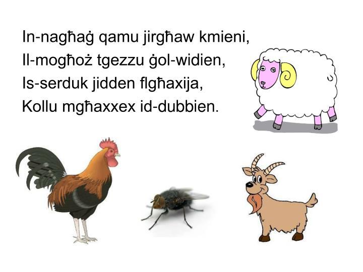 In-nagħaġ qamu jirgħaw kmieni,