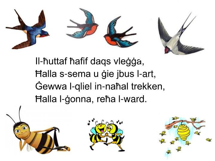 Il-ħuttaf ħafif daqs vleġġa,