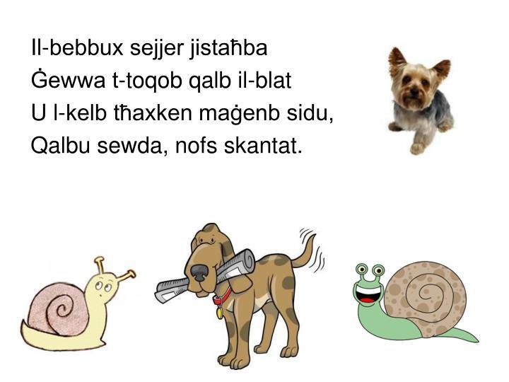 Il-bebbux sejjer jistaħba