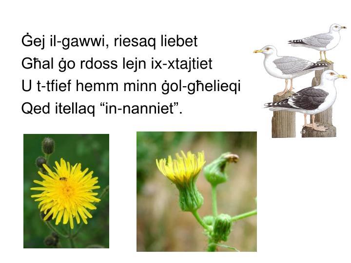Ġej il-gawwi, riesaq liebet