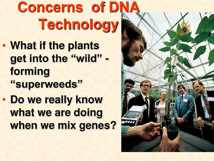 Concerns  of DNA Technology
