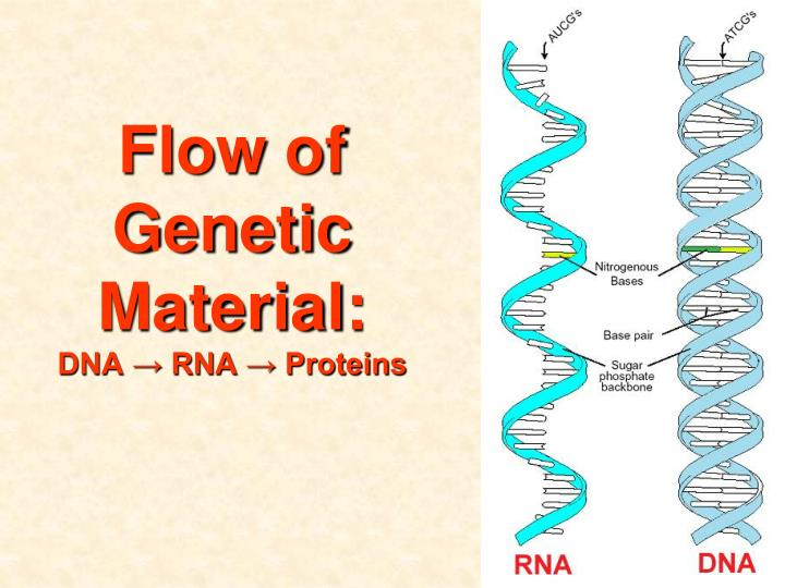 Flow of Genetic Material: