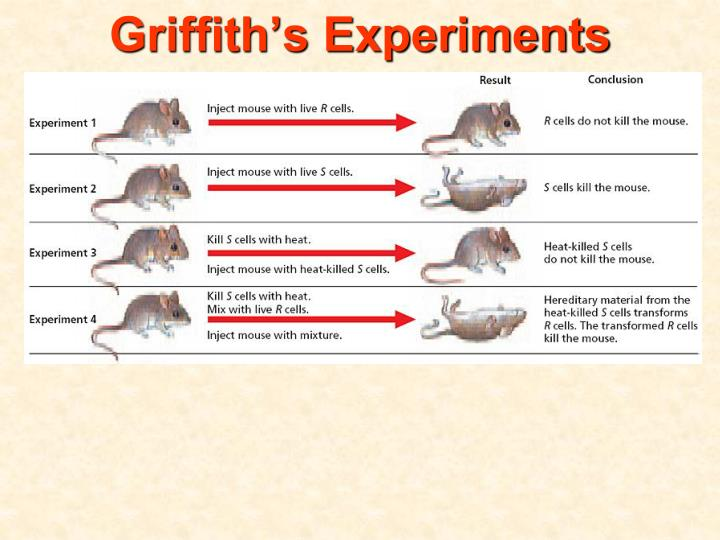 Griffith s experiments1