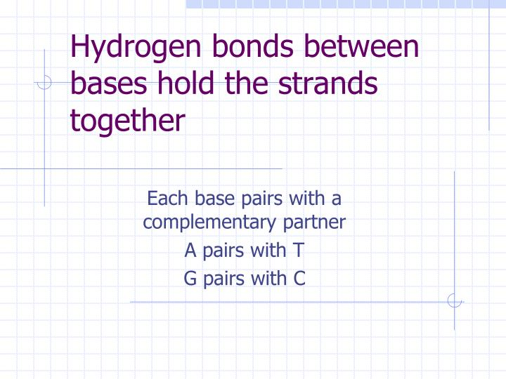 Hydrogen bonds between bases hold the strands together
