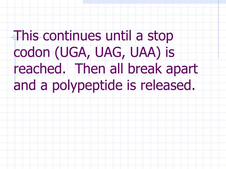 This continues until a stop codon (UGA, UAG, UAA) is reached.  Then all break apart and a polypeptide is released.