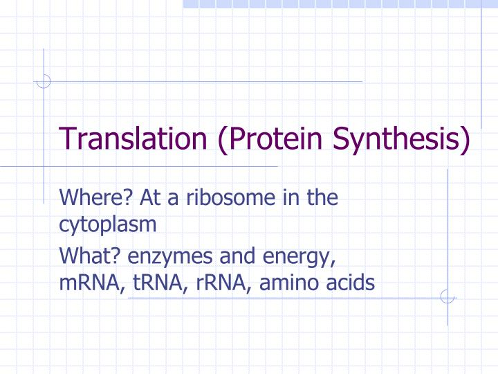 Translation (Protein Synthesis)