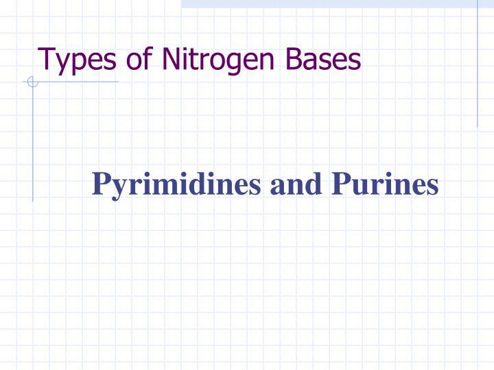 Types of Nitrogen Bases