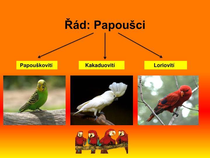 Řád: Papoušci
