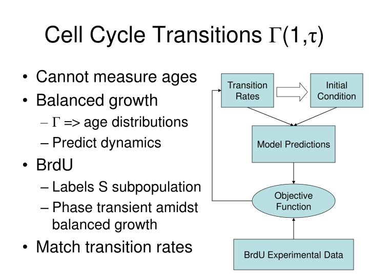 Cell Cycle Transitions