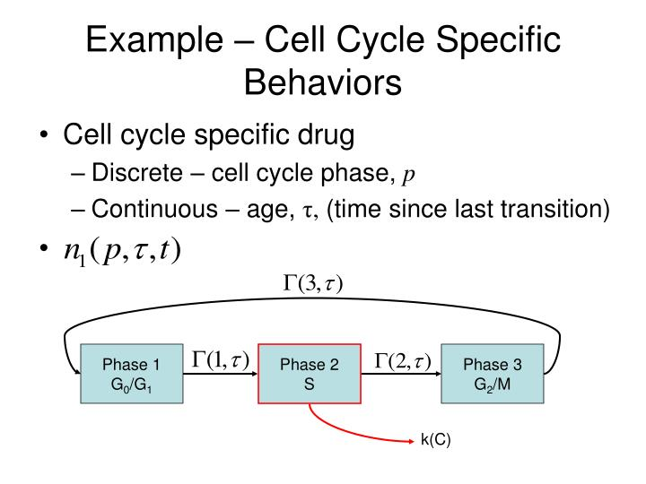 Example – Cell Cycle Specific Behaviors