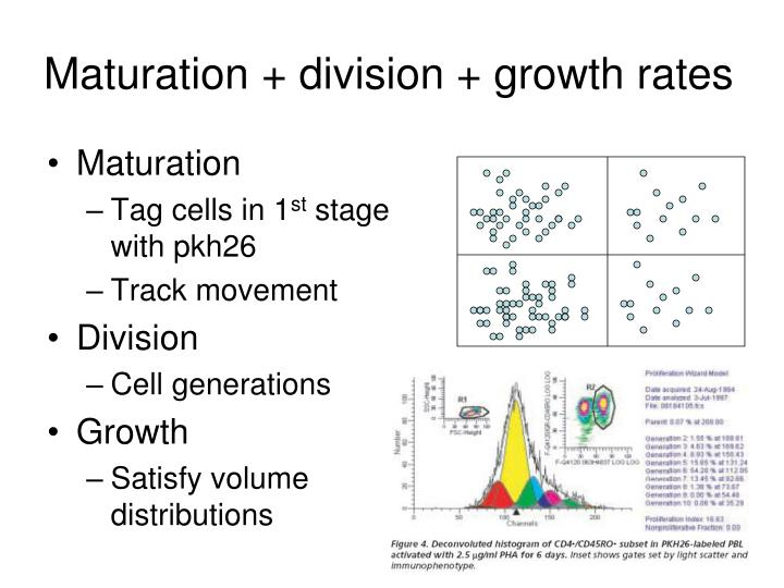 Maturation + division + growth rates