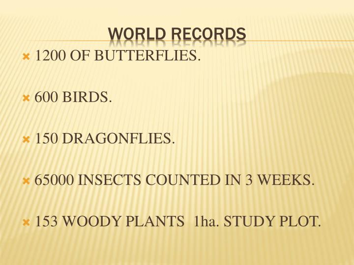 1200 OF BUTTERFLIES.
